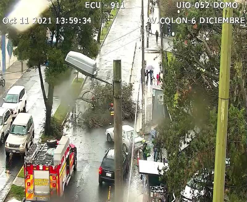 Caída de árbol en Quito por lluvias