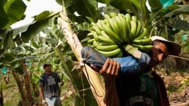 Innovación en nutrición foliar incrementó más de un 30% la productividad en banano